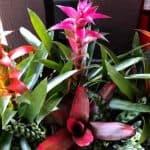 Is The Bromeliad Plant Poisonous?