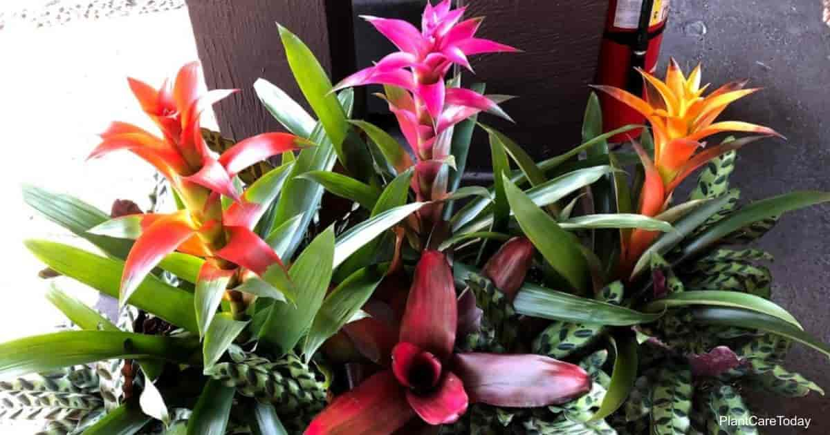 Assortment of Bromeliad plants