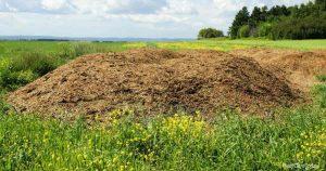 How To Use Chicken Poop Fertilizer In The Garden