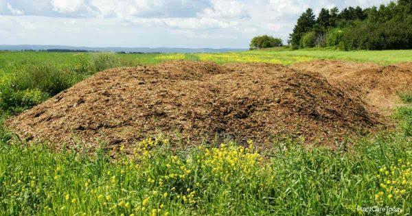 Manure pile of chicken poop fertilizer