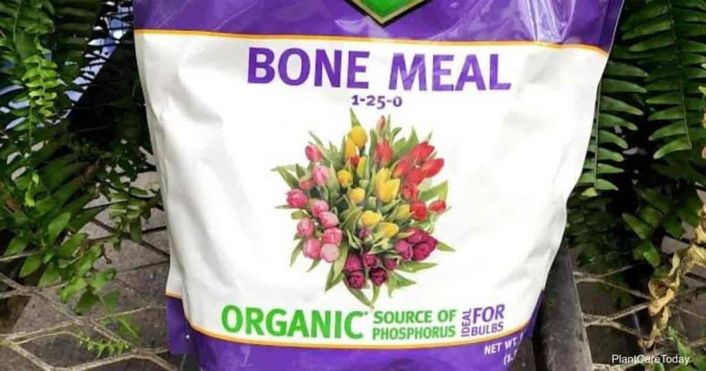a bag of bone meal for roses