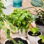 Why Every Indoor Gardener Needs Diatomaceous Earth