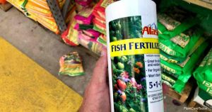 Can You Use Fish Emulsion To Fertilize Succulents?