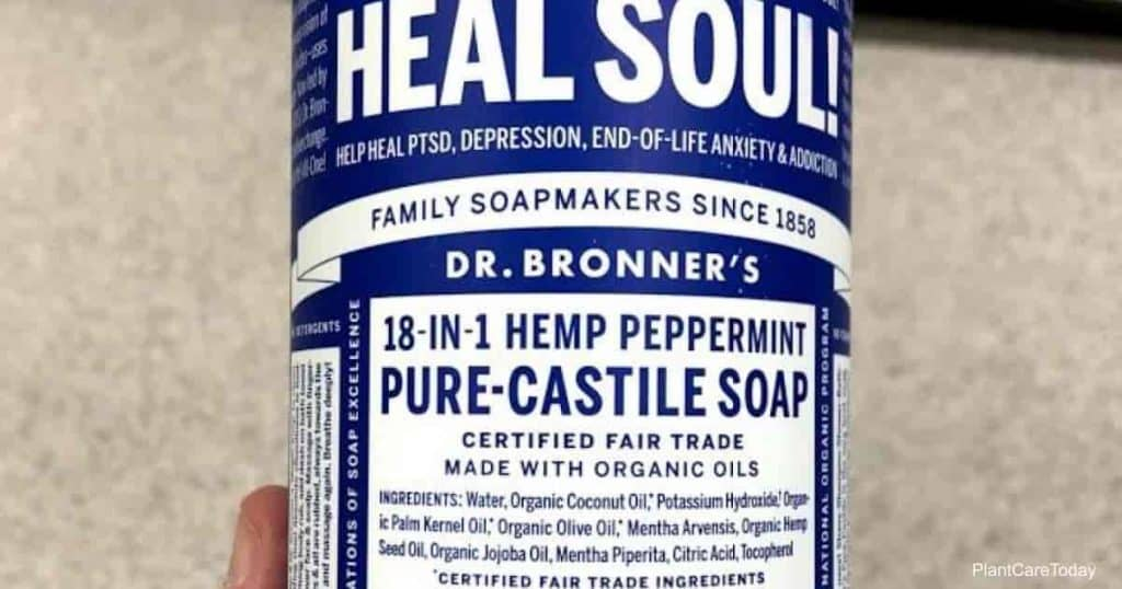 Pure Castile soap spray are one of the basics in a homemade insecticidal soap spray