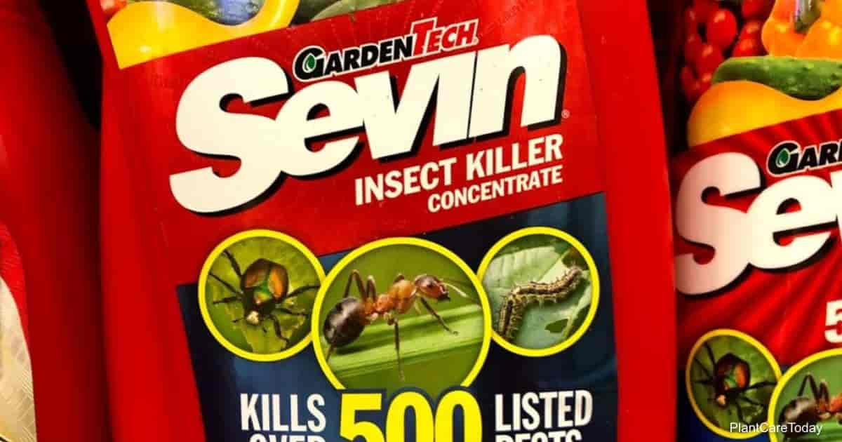 Sevin powder and spray for garden pests control