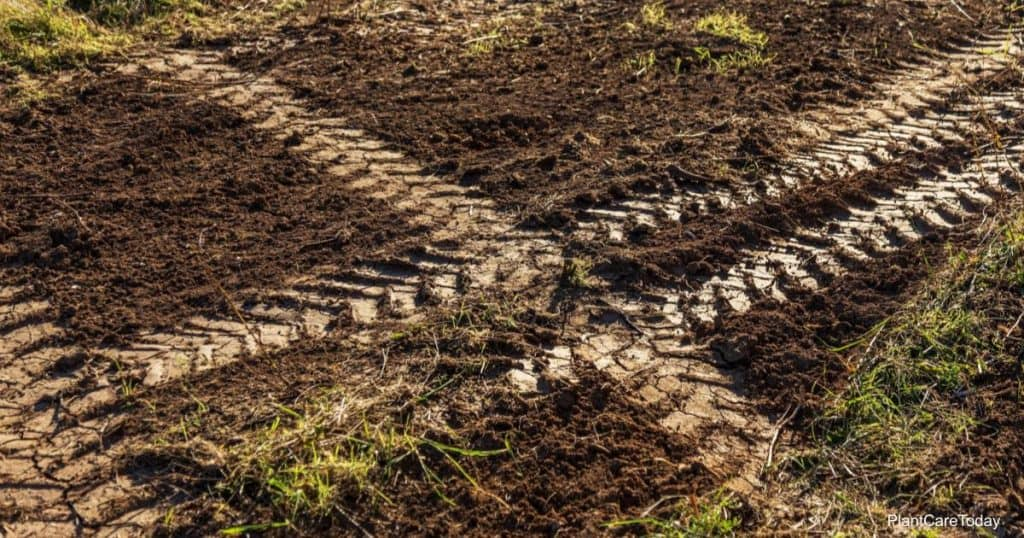 Clay soil and tips on improving clay soils
