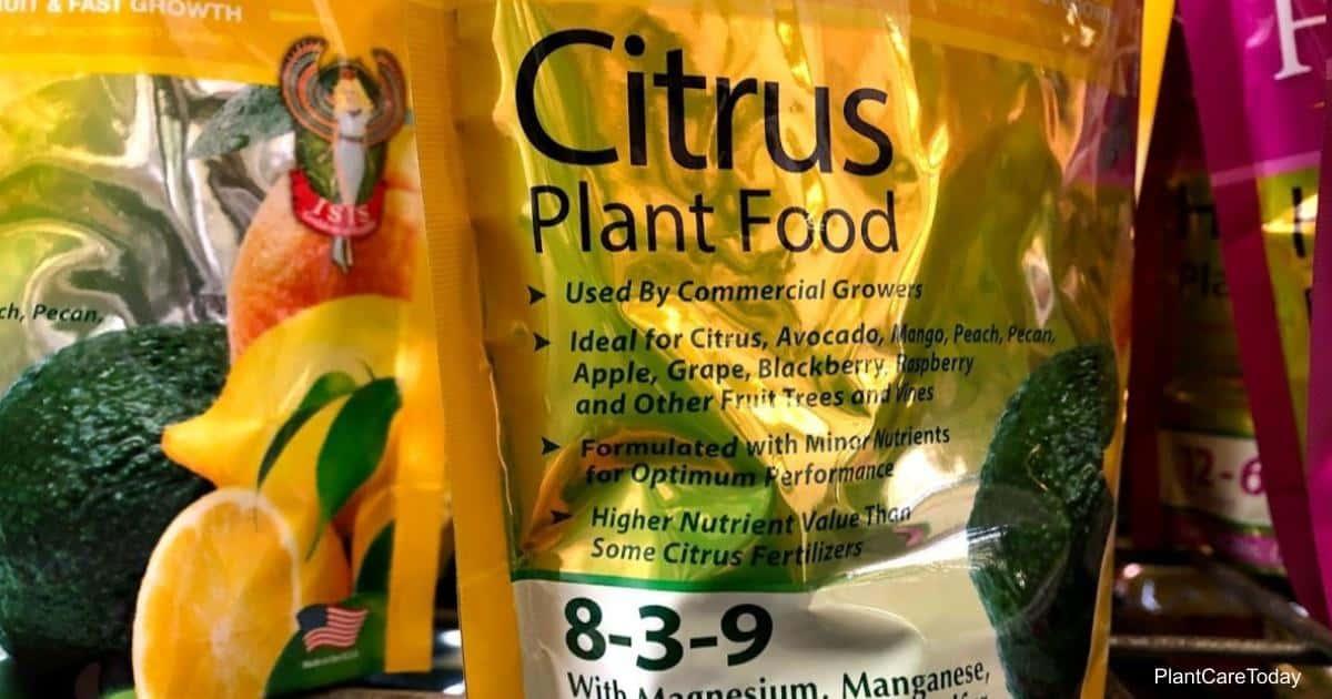 Bag of citrus fertilizer 8-3-9