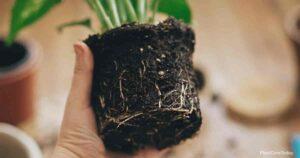 Potting Soil vs Garden Soil: Which Is Better?