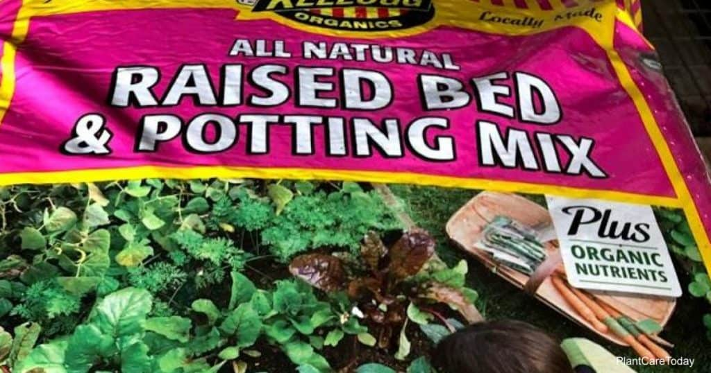 Bag of potting soil - Can potting soil mixes go bad?