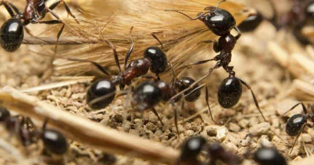 ants in a garden on a plant