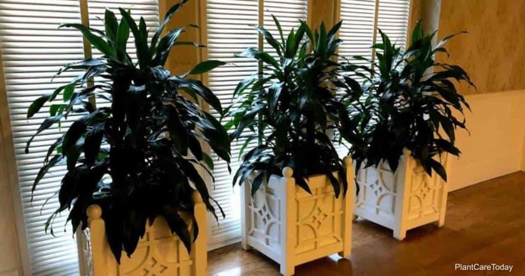 Neem oil for house plants