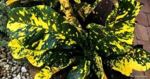 Tips On Making Neem Oil Plant Spray