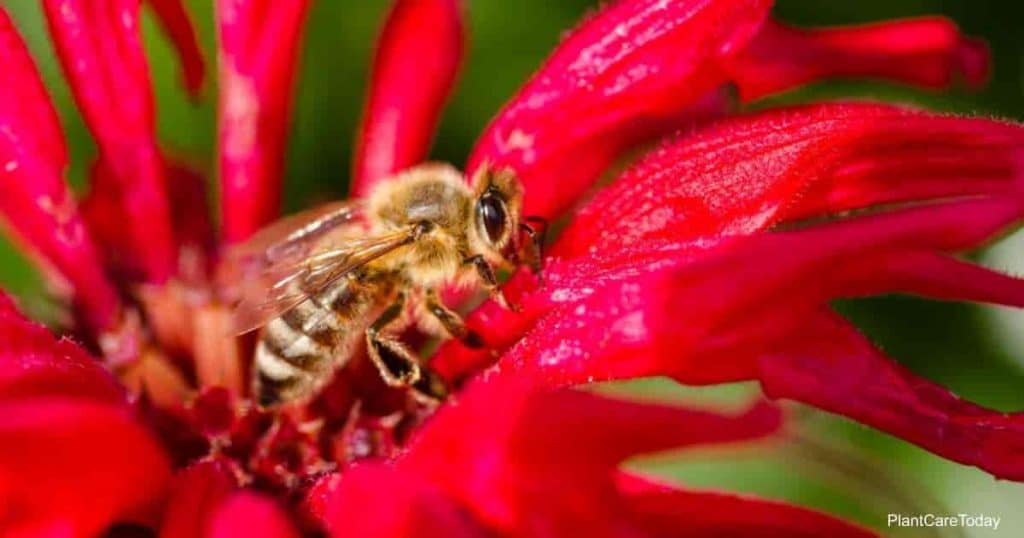 Are Bees safe around Neem Oil?