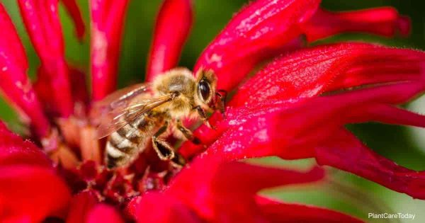 Does Neem oil hurt Bees?