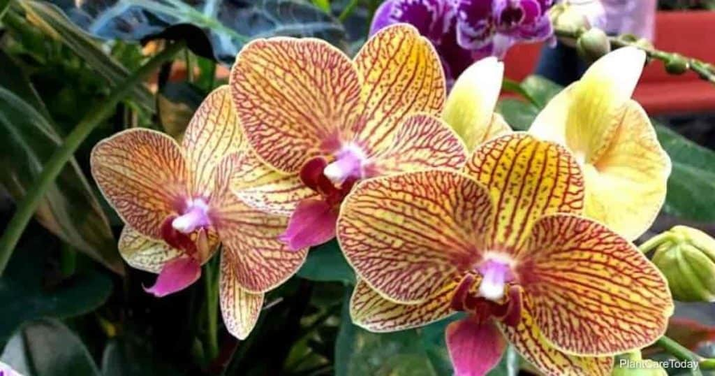 Using Neem on Orchid plants