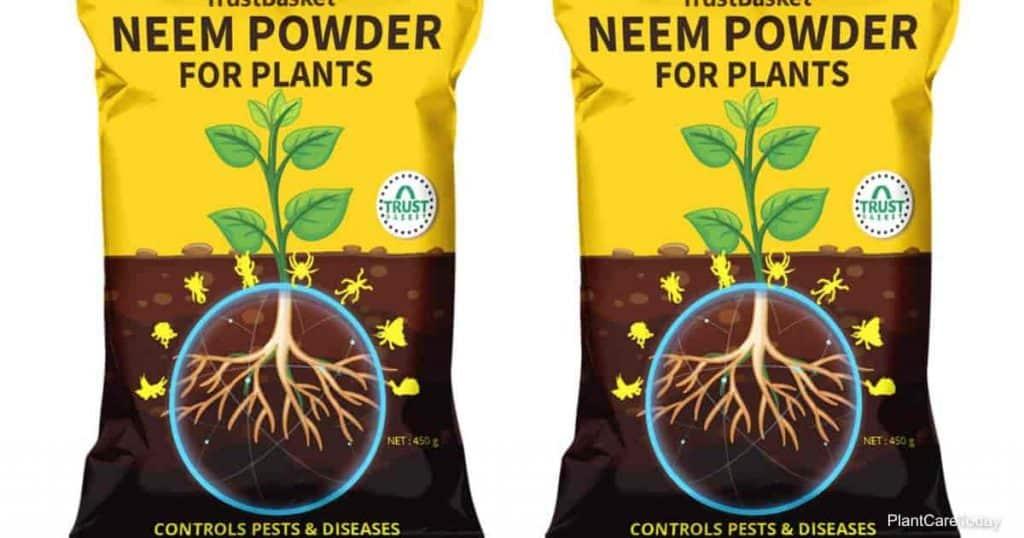 Pó de Neem para controle de pragas de plantas