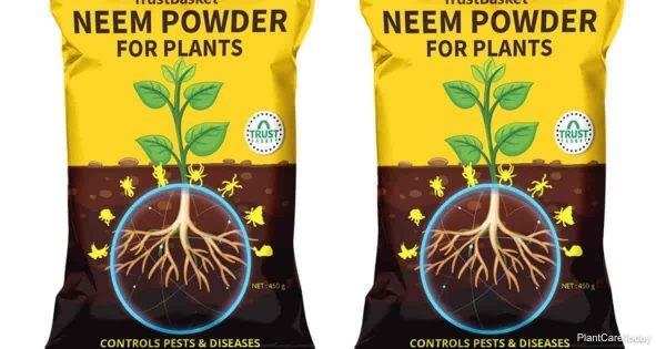 Neem powder for plant pest control