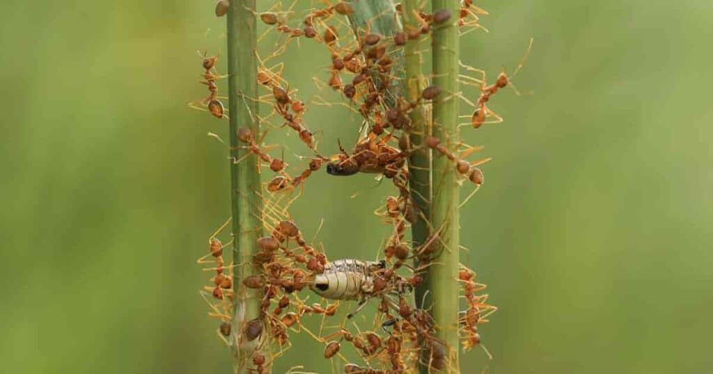 Ants climbing on stems of a plant