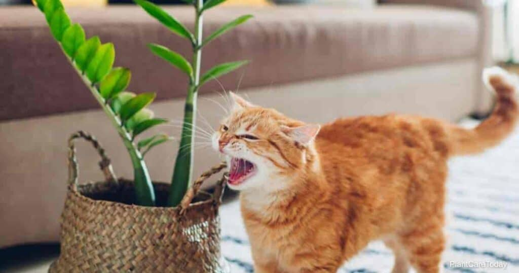 cat and a  zz plant