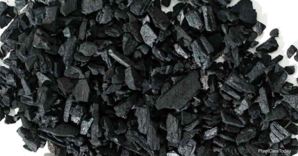 Horticultural Charcoal for use in potted plants