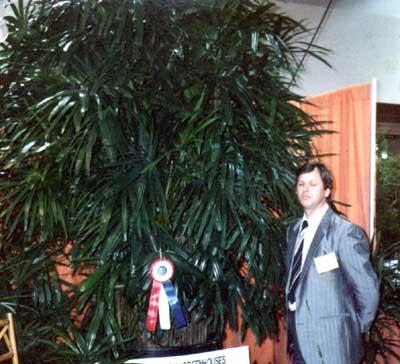 Rhapis palm TPIE 1990