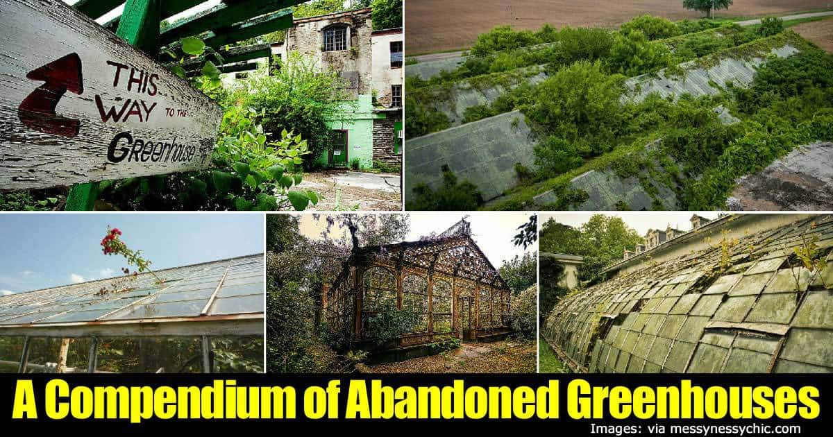 abandoned-greenhouses-22820151256