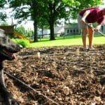 Acid Soil: How To Make Soil More Acidic