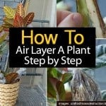 How To Air Layer: Air-Layering A Plant Step by Step