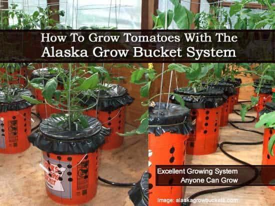 alaska-grow-bucket-013114