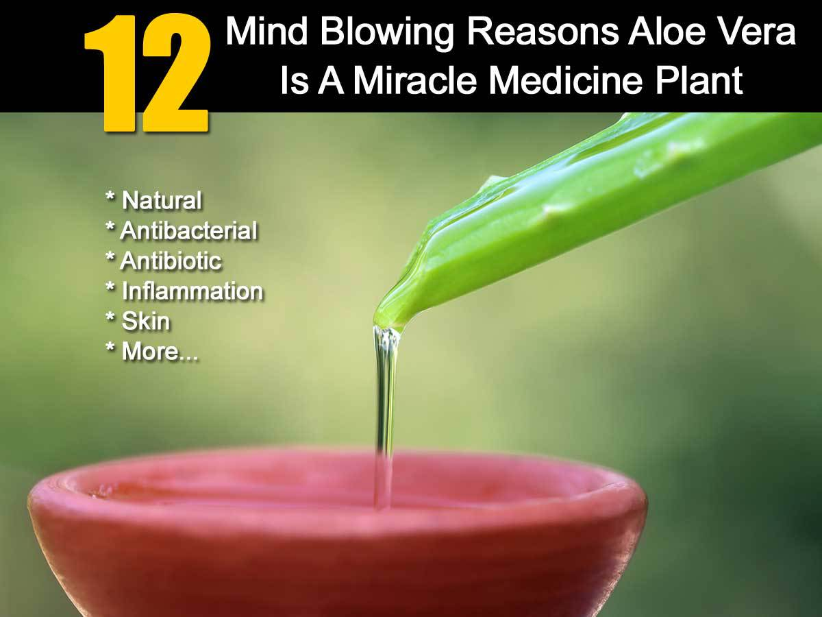 12 mind blowing reasons aloe vera is a miracle medicine plant. Black Bedroom Furniture Sets. Home Design Ideas