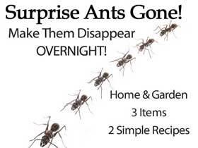 ants-gone-overnight-sb-HG