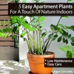 5 Easy Apartment Plants For A Touch Of Nature Indoors