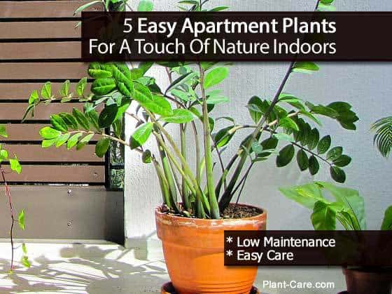 potted zz plant - one of the best for apartments