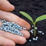 How Much Fertilizer Per Plant & How to Apply It