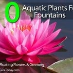 10 Free-Floating Aquatic Plants For Your Fountain