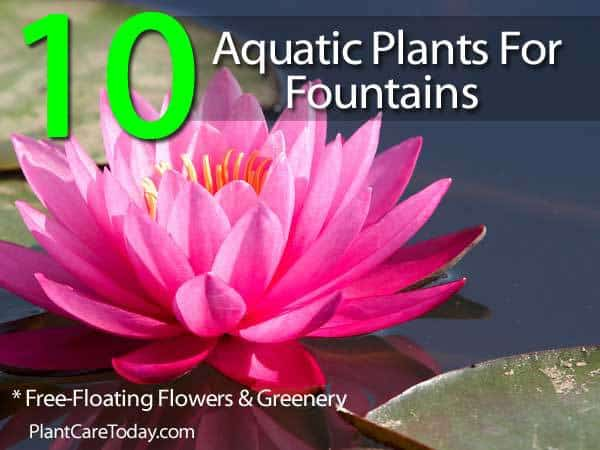 aquatic-plants-053114