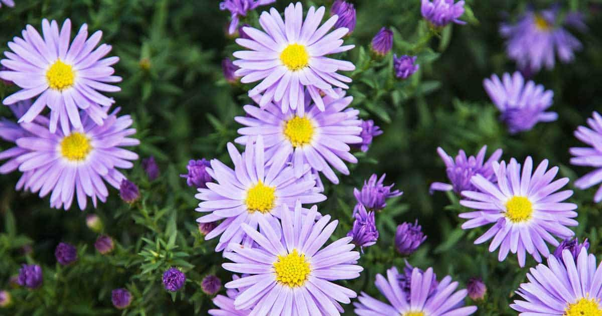 9 Best Summer Flowers