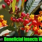 How To Attract Beneficial Insects With Plants