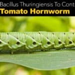 What Is Bacillus Thuringiensis, How Do You Use It In The Garden?
