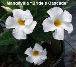 backyard-brides-cascade
