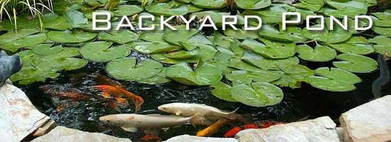 rp_backyard-pond-550.jpg