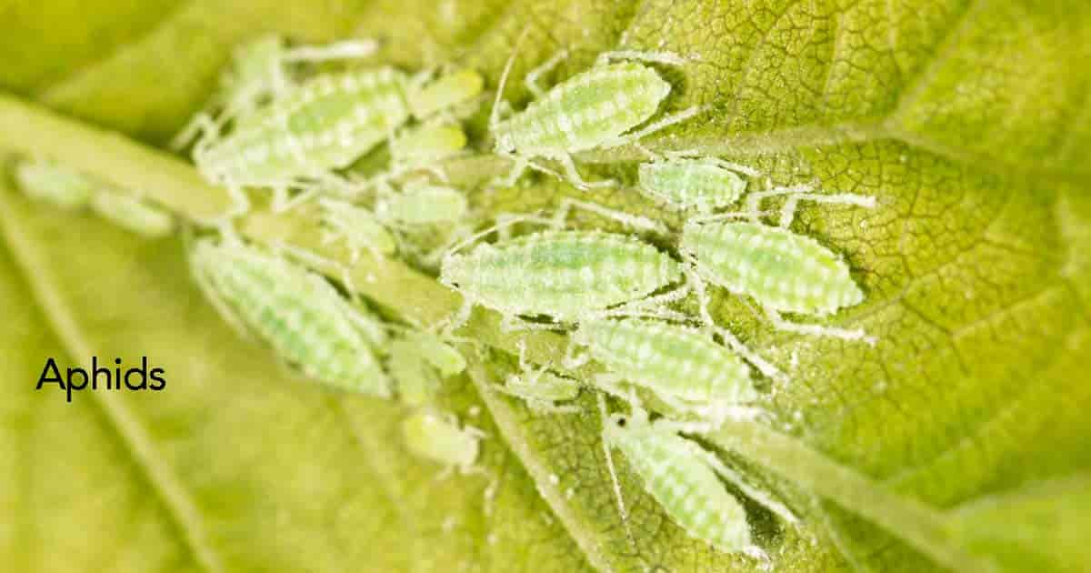 Bad Garden Insects: A Guide To Identifying Garden Pests (30