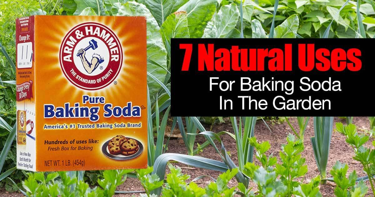 Uses For Baking Soda In The Garden