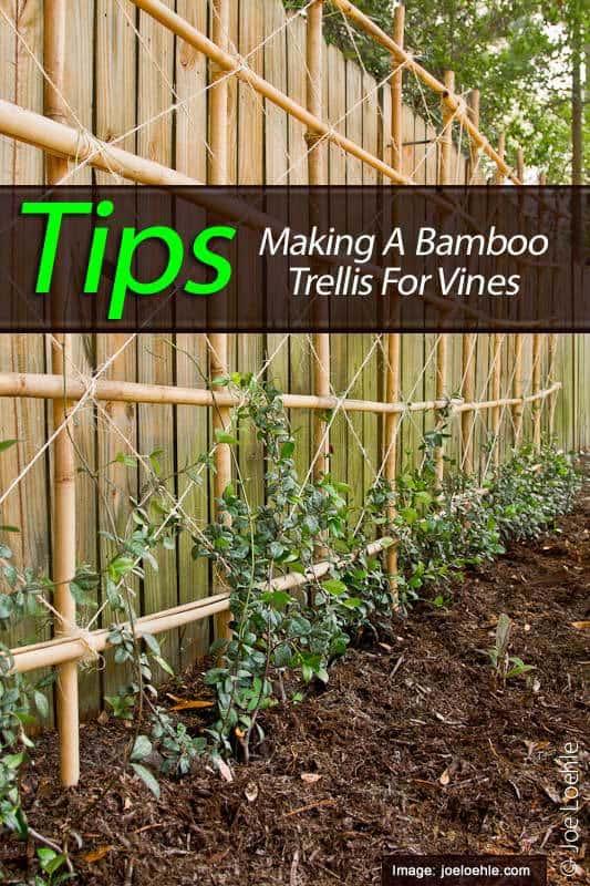 tips on making bamboo trellis for vines