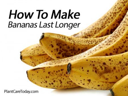 bananas-last-longer-021514