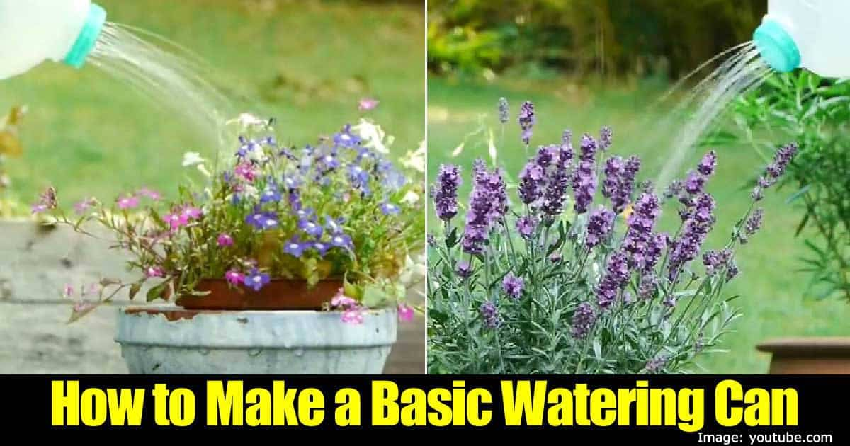 basic-watering-can-43020151413