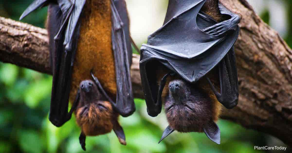 Bats hanging upside down resting