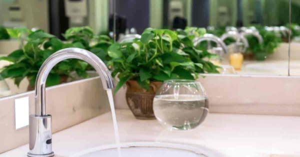 Pothos used for decorating a bathroom