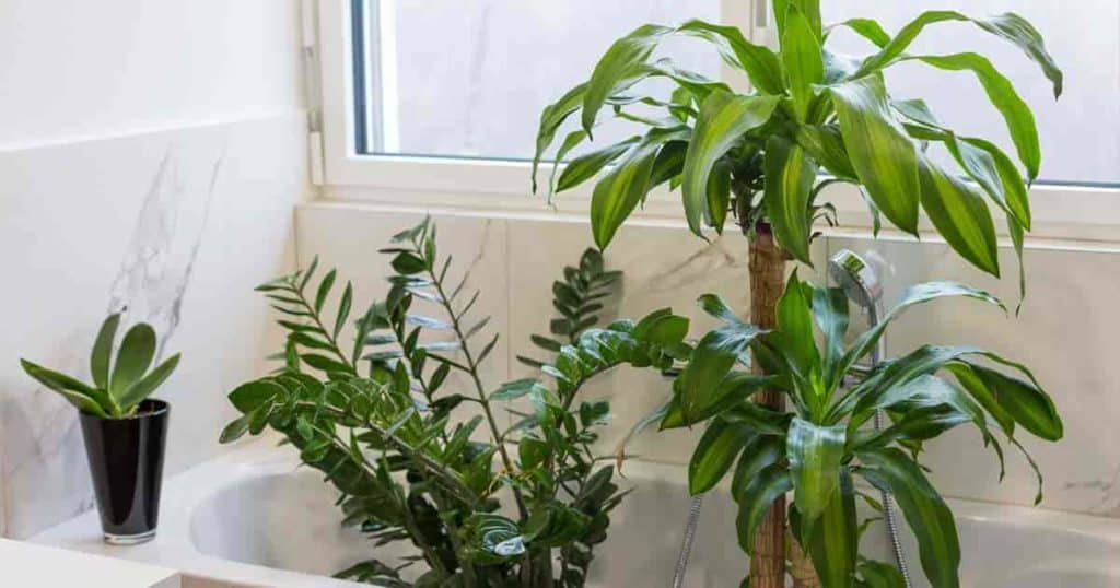 bathroom plants sitting in a bathroom ready for cleaning