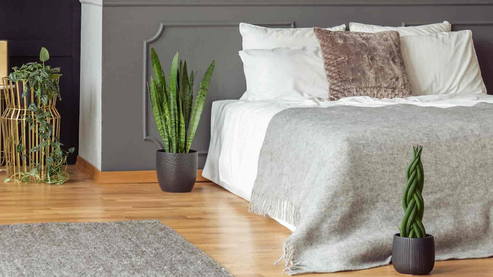 bedroom with snake plants